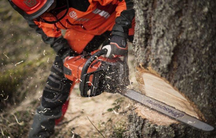 Sex steg till framgångsrik trädfällning